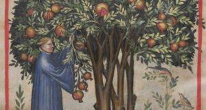 albero-del-melograno_ncg1